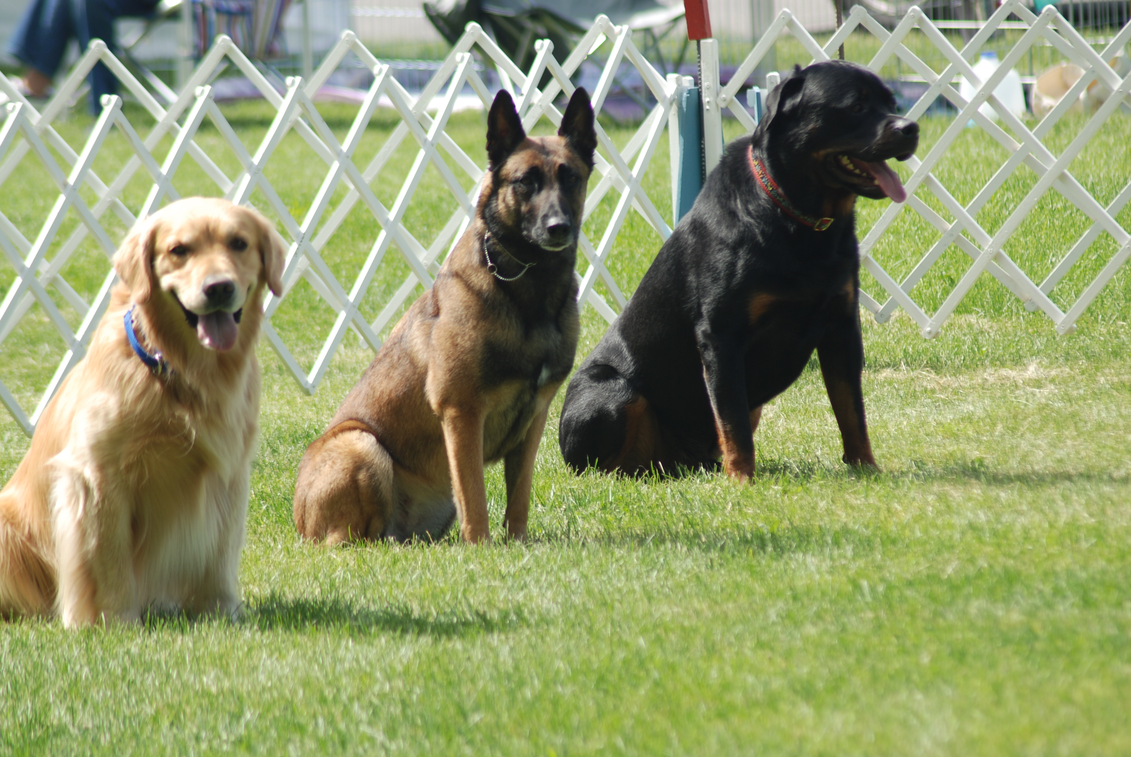 Obedience Classes - Summer 2018 @ Tautphaus Park